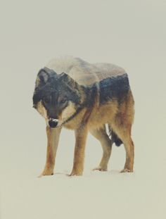 http://www.ignant.de/2015/05/07/double-exposure-animal-portraits-by-andreas-lie/