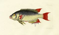I love this Fish. I need to work it into a Valentine. Nuestras MiniaturaS - ImprimibleS