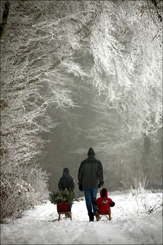 Dad and his children have completed their mission after the ice storm that coats the tree branches. They return on the snowy road through the silence of the winter wonderland -- no sound except snow crunching under boots. Winter Szenen, Winter Magic, Winter Time, Winter Christmas, Christmas Tree, Winter Walk, Christmas Decor, Winter Night, Country Christmas