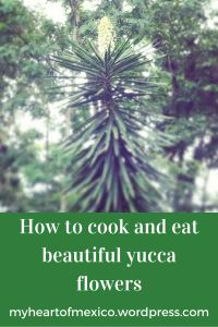 How to cook and eat yucca flowers!