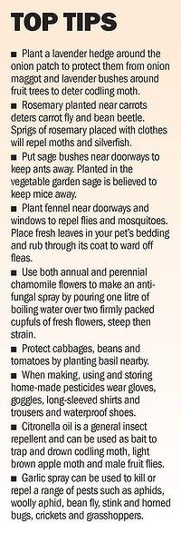 Natural Garden Tips - esp the sage.