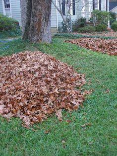 Remove Fallen Leaves