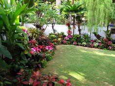 journey through paradise: bromeliads