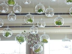 Hanging glass bubbles. |by Flower Jar