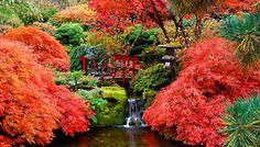 butchart+gardens+perennial+garden | The Butchart Gardens | Plants