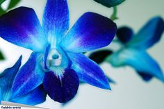 The Lost Orchid <3
