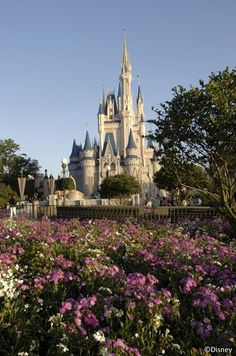Technology makes planning your Disney vacation a breeze