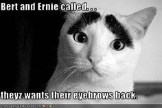 Bert and Ernie called. . .  theyz wants their eyebrows back.