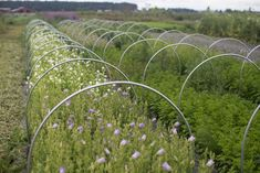 Succession Planting: How To Keep The Harvest Going All Season Long - Floret Flowers Growing Flowers, Cut Flowers, Wild Flowers, Cut Flower Garden, Flower Farm, Flower Gardening, Vegetable Garden, Garden Plants, Succession Planting