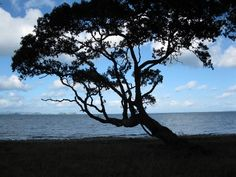 A pohutukawa tree in silhouette-Coromandel area of New Zealand New Zealand Beach, Most Beautiful, Beautiful Places, Art Houses, Cool Shapes, Photo Tree, Countries Of The World, Home Art, Beaches