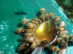 A spoon full of honey for the bees                                                                                                                                                     More