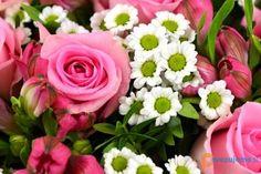 Cvetličarna Zvonček, Frida Bijec s.p. Rose, Flowers, Plants, Pink, Florals, Roses, Planters, Flower, Blossoms