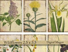 Wildflowers digital collage sheet vintage Victorian flower images atc gift tag aceo 2.5 x 3.5 shabby tattered paper by DigitalMagpie on Etsy