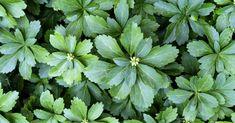 Schaduwtuin Ontwerpen: 3 Handige Tips En 10 Perfecte Planten