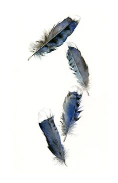 Blue Jay Feathers 11 x 17 Print of my original watercolor painting (the original has been sold).   Printed area: 8 1/4 x 14 centered on Paper
