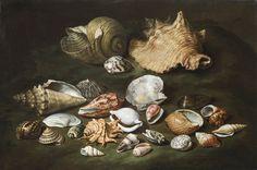 Paolo Porpora - (Naples 1617 - c. 1673 Naples or Rome) Still life with shells Canvas, x 67 cm Naples, Shell Animals, Rome, Seashell Painting, Underwater Life, Vanitas, Shell Art, Italian Art, Old Master