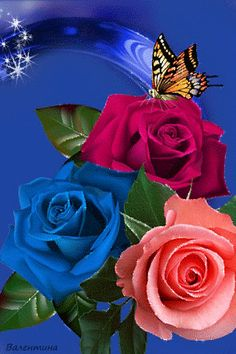 By Artist Unknown. Beautiful Rose Flowers, Flowers Gif, Beautiful Flowers Wallpapers, Beautiful Gif, All Flowers, Beautiful Butterflies, Butterfly Wallpaper, Flower Wallpaper, Cellphone Wallpaper