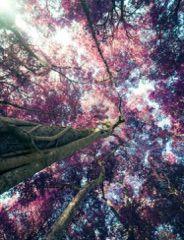 Tree of hope.  #Ambition #Hope #Tree #Beauty #Amazing #Aspiration #Goal #Dreams #Lifestyle #SITACouture