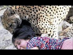 """""""Ataki Dzikich Zwierząt"""" - film dokumentalny. Lektor PL - YouTube"""