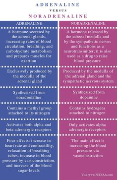 What is the Difference Between Adrenaline and Noradrenaline - Pediaa. Biology Facts, Study Biology, Biology Lessons, Science Biology, Nursing Tips, Nursing Notes, Funny Nursing, Basic Anatomy And Physiology, Psychology Notes