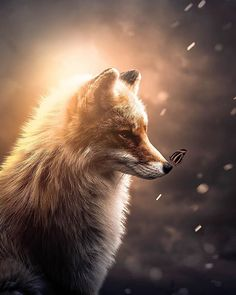 photo editing,photo manipulation,photo creative,camera effects Nature Animals, Animals And Pets, Beautiful Creatures, Animals Beautiful, Cute Baby Animals, Funny Animals, Fuchs Baby, Fox Pictures, Fox Art