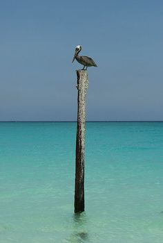 Absolutely adore pelicans, extra clear blue water is just a bonus!!