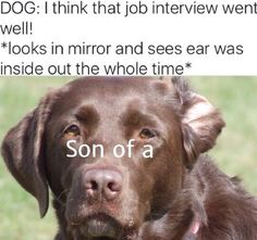 Dog i think that job interview went well looks in mirror and sees ear was inside out the whole time son of a