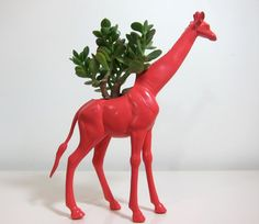 Tory the Giraffe Planter and jade plant