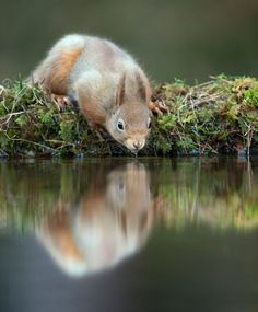 Squirrels are inquisitive gymnasts that help our forests thrive!