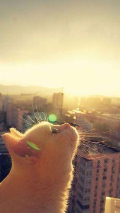 enjoying the sunshine http://www.traveling-cats.com