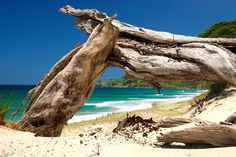 Parkiri Beach in New Zealand , just amazing sunny beach in really special place Strand Wallpaper, Beach Wallpaper, Beach Pictures, Great Pictures, Beach Pics, New Zealand Beach, Caribbean Homes, Sunny Beach, Mexico Vacation