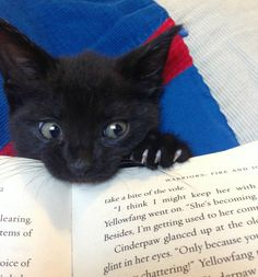 Black cat perched on a book. Noticed the book is a warrior cats book! Cute Kittens, Cats And Kittens, Ragdoll Kittens, Bengal Cats, Kitty Cats, Baby Animals, Funny Animals, Cute Animals, Funny Animal Pictures