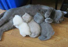 Мама и 3 котёнка