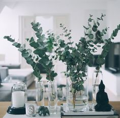 Eukalyptus-Weihnachtstische: 10 Ideen - Clem Around The Corner, Plantas Indoor, Deco Floral, Deco Table, Decoration Table, Vases Decor, Decorating With Glass Vases, Floral Arrangements, Table Arrangements, Planting Flowers