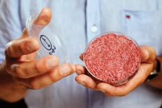 The world's first beef burger created from stem cells has a texture that's closer to cake than steak. Hamburgers, Animal Agriculture, Petri Dish, Food Industry, Stem Cells, Food Coloring, Steak, At Least, Barbecue