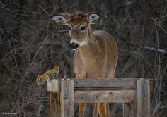 Oh Deer, let's share! Ottawa, ON