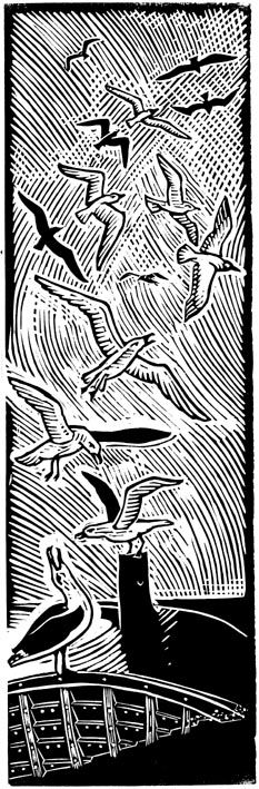 Coyote Atelier printmaking love: Seagulls linocut by printmaker James Dodds. Wonderful use of the lines in negative space that show movement of the bird wings. Linocut, Linocut Prints, Art, Encaustic Painting, Bird Prints, Architecture Art, Printmaking Art, Print Inspiration, Prints