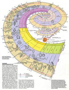 Origin and Development of Life Visual – Encyclopaedia Universalis - Education Science Earth Science, Science And Nature, Formation Management, Evolution, Charles Darwin, Line Illustration, Prehistory, Data Visualization, Natural History