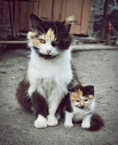 Wild Cat Mother and Child