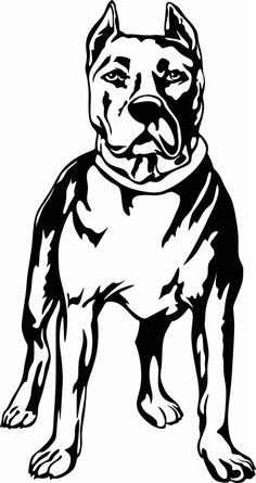 Pit Bull Standing Vinyl Cut Out Decal, Sticker - Choose your Color and – Vinyl Ink Design Animal Silhouette, Silhouette Art, Animal Drawings, Art Drawings, Airbrush, Gravure Laser, Glass Engraving, Stencil Art, Stencils