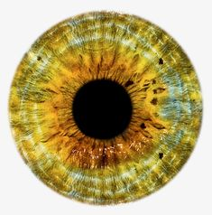 Explore Hd Eye Pupil Png Image Background - Eye Lens Png Hd and upload more creative png images on Sccpre. Eyes Clipart, Realistic Eye Drawing, Golden Eyes, Magic Eyes, Dragon Eye, Human Eye, Eye Photography, Doll Eyes, Yellow Eyes