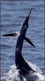 Catchalottafish-  The best fishing charter in the Florida Keys- Islamorada