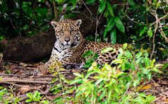 I got Jaguar! We Know Your Favorite Animal Based On Your Favorite Actor