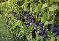 Vegetable Garden, Plants, Beautiful Gardens, Agriculture, Landscape, Farm Gardens, Garden Landscaping, Small Farm, Gardening Tips