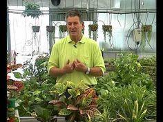 El Jardinero en Casa - Cuidados del Croton - YouTube