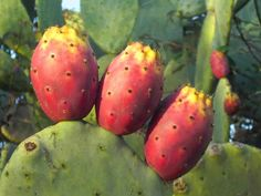 ทำไมบางคนเลี้ยงแล้วตาย ทำไมบางคนเลี้ยงไม่ตาย? แคคตัส หรือ ต้นกระบองเพชร (cactus) เป็นพืชชนิดหนึ่งที่อยู่ในทะเลทรายที่แห้งแล้งกันดาร เพราะต้นกระบองเพชร...