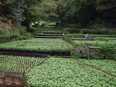 Permaculture Farming, Crop Field, Home Grown Vegetables, Down On The Farm, Green Fields, Nagano, Small Farm, Garden Trees, Water Plants