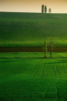 Five Trees by Fabio Montalto