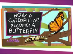 """How a Caterpillar Becomes a Butterfly """"You've seen caterpillars, and you've seen butterflies. But do you know how a caterpillar becomes a butterfly? Jessi explains the wonder of. 1st Grade Science, Kindergarten Science, Teaching Science, Teaching Ideas, Science Videos, Science Lessons, Life Science, Art Lessons, Spring Activities"""