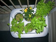 topcomplete.jpg  Hydroponics-At Home and For Beginners  Instructable